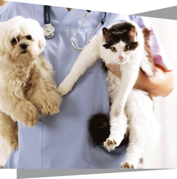 renal failure in cats